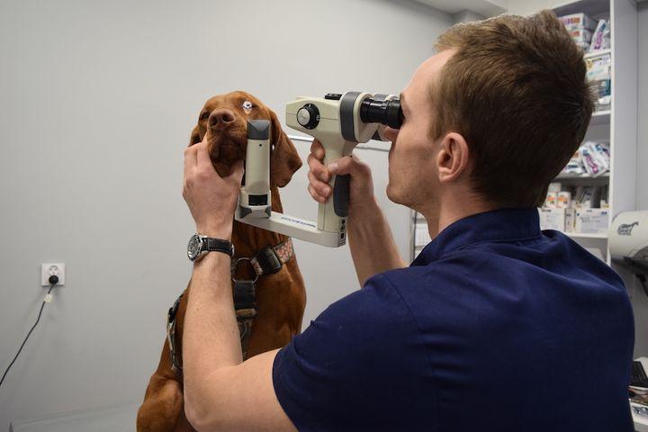 Badanie oka u psa